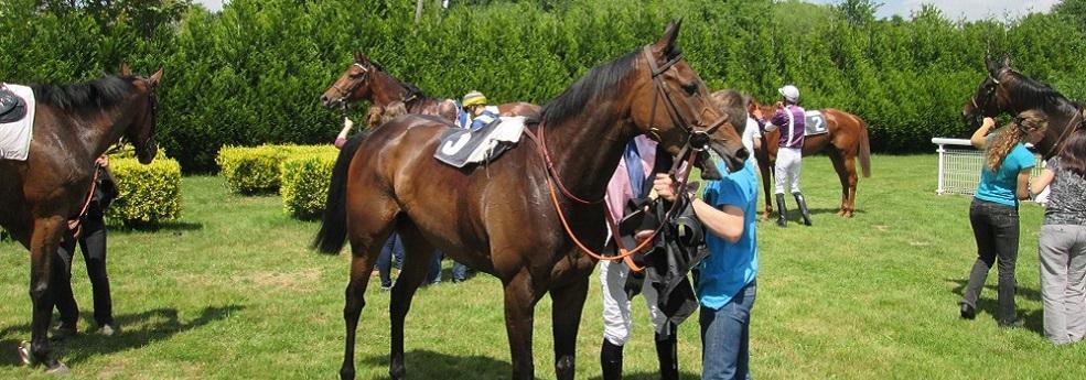 gaetano donizetti cheval